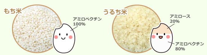 もち米とうるち米のちがい