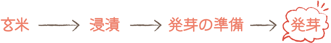 玄米→浸漬→発芽の準備→発芽